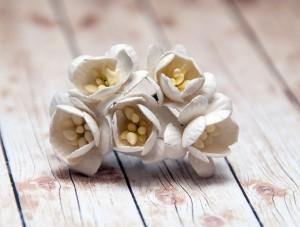 Kwiaty wiśni mulberry, 5 sztuk, białe